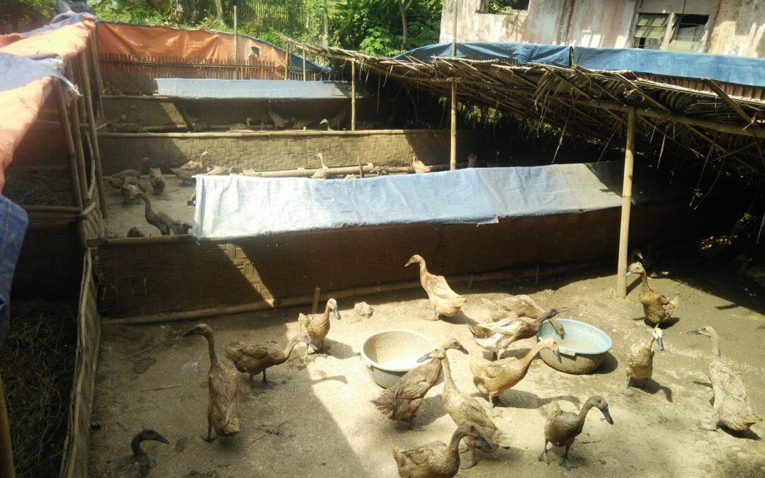 Desa Jayabakti-Kecamatan Cidahu : Kelompok Ternak Bebek Petelur Langkah Awal Menentukan PRUDES Desa Jayabakti.